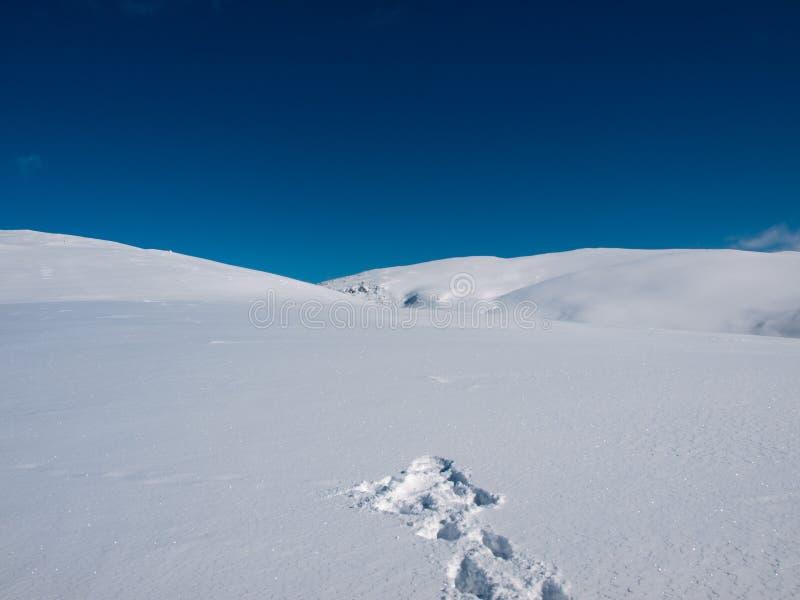 De sneeuw van de lawine royalty-vrije stock foto