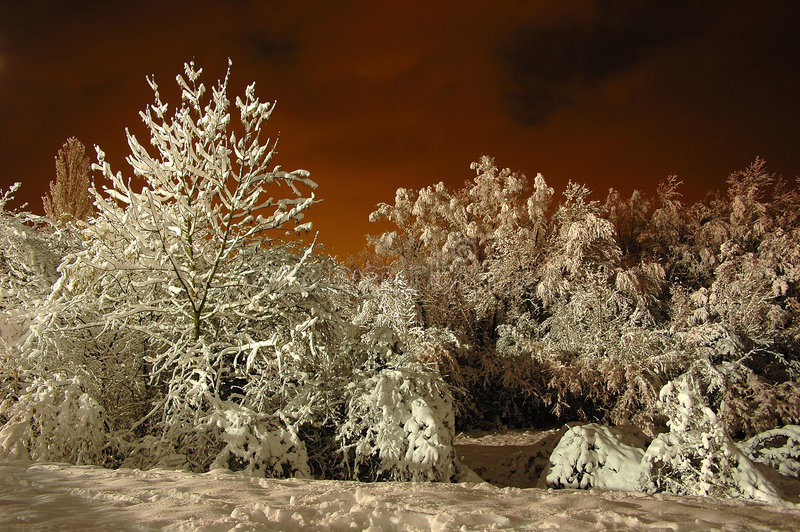 De Sneeuw van de nacht royalty-vrije stock foto's