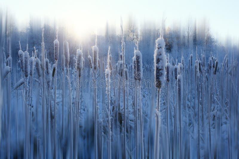 De sneeuw van de vorstwinter stock foto