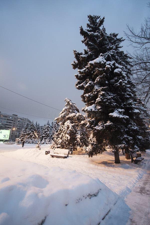 De sneeuw van het de winterpark op bomenkerstbomen ringt snow-covered weg royalty-vrije stock foto
