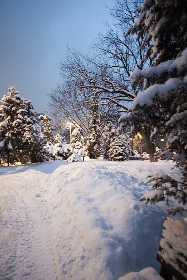 De sneeuw van het de winterpark op bomenkerstbomen ringt snow-covered weg royalty-vrije stock afbeeldingen