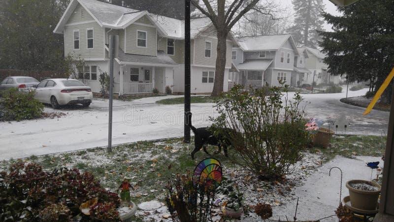 De sneeuw van Oregon royalty-vrije stock foto