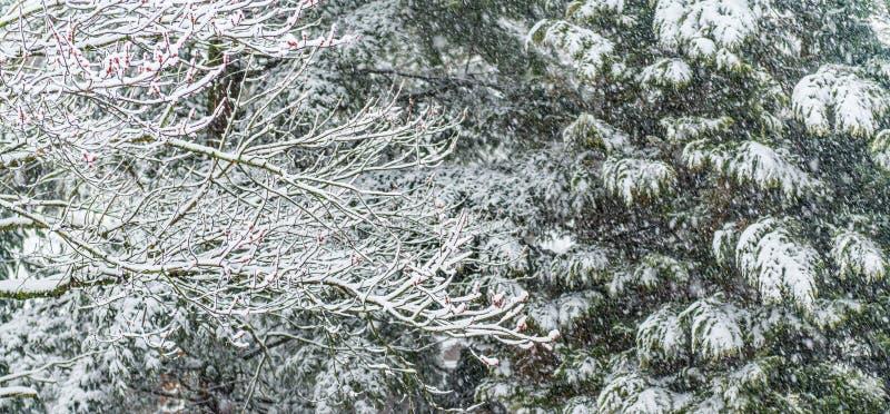 De sneeuw vertakt zich Achtergrond stock fotografie