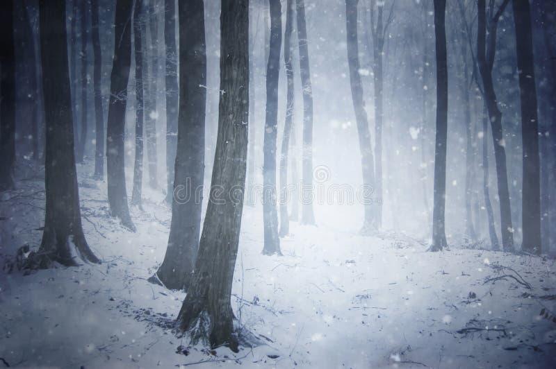 De sneeuwonweer van de winter in een bos met wind die Th blaast stock foto