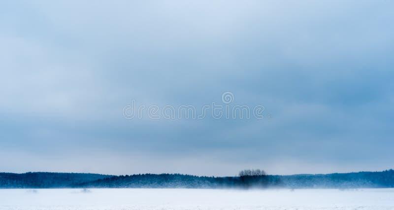 De sneeuwstorm op de rand van het bos stock foto's
