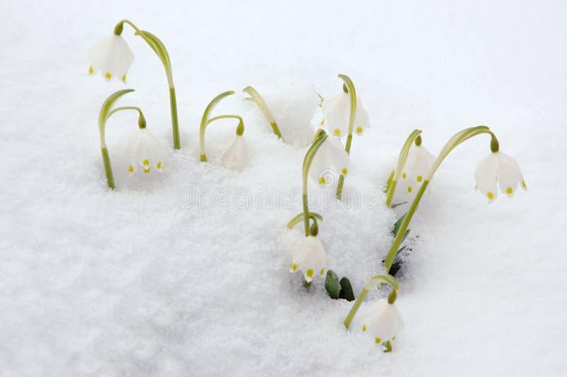 De sneeuwvlokken van de lente in sneeuw royalty-vrije stock fotografie