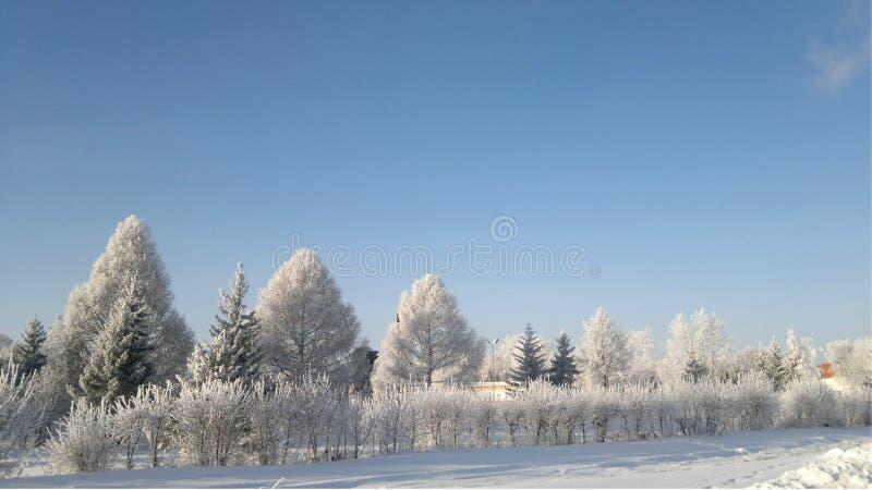De sneeuwvorst van de wintersiberië Taiga stock foto's