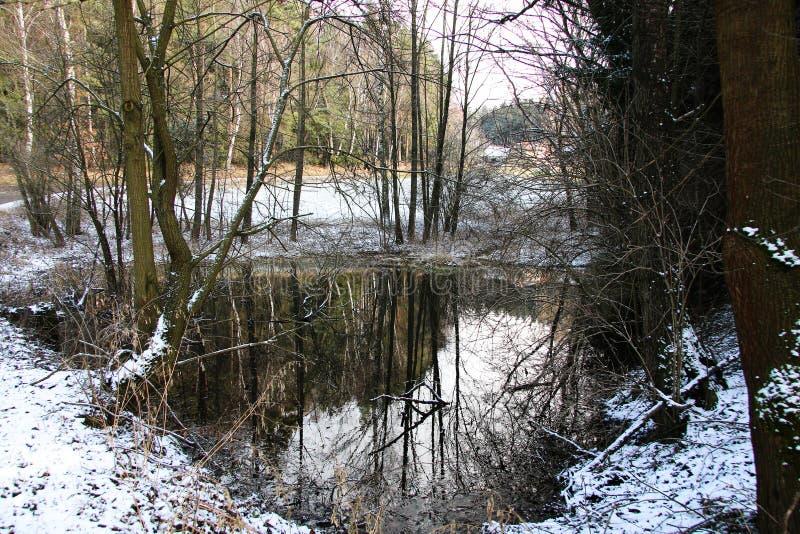 De sneeuwwildernis van de vijverwinter stock afbeeldingen