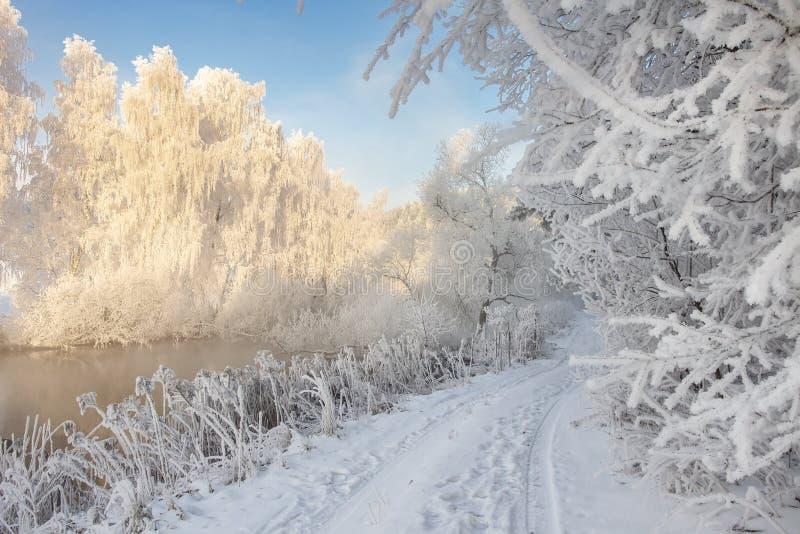 De sneeuwwinter Ijzig de winterlandschap met rijp op installaties en bomen Verbazende de winterscène op duidelijke ochtend royalty-vrije stock foto's