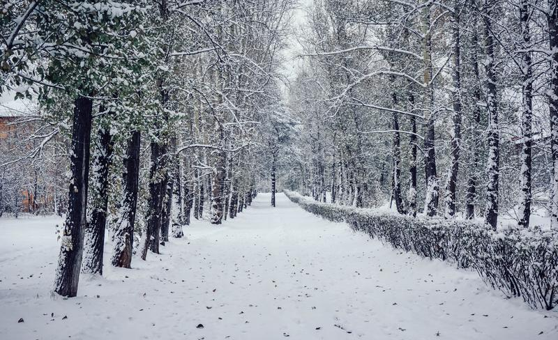 De sneeuwwinter in Siberië Rusland stock foto's
