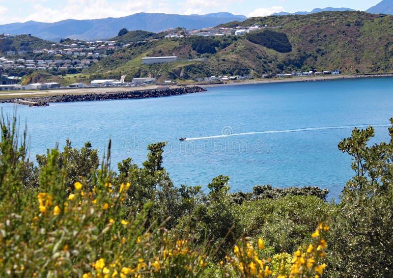 De snelheden van een motorboot over Lyall-Baai in Wellington, Nieuw Zeeland De luchthaven is zichtbaar op de achtergrond stock foto's