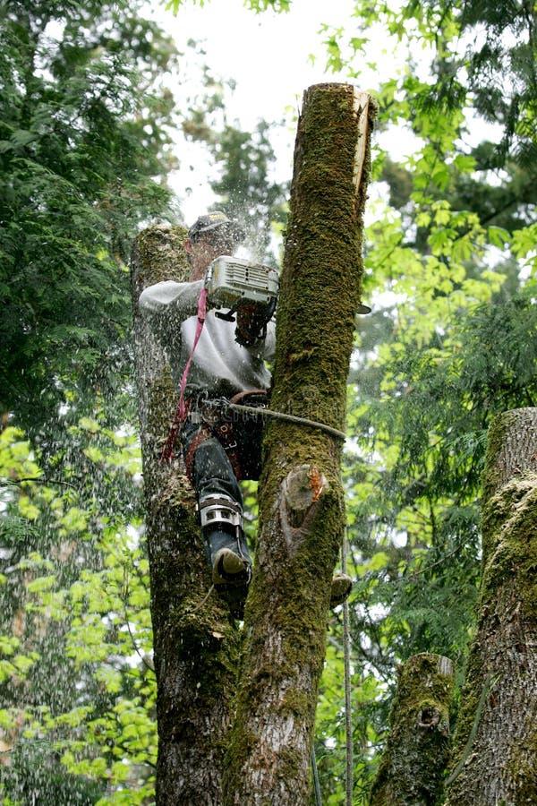 De snijder van de boom stock afbeelding