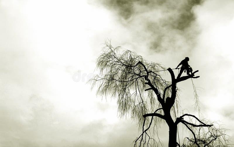 De snijder van de boom