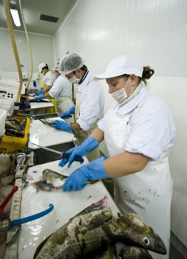 De snijders van vissen in actie stock afbeeldingen