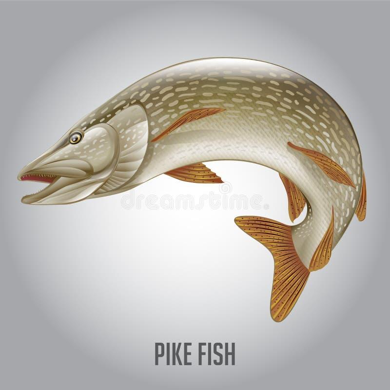 De snoeken vissen vectorillustratie vector illustratie