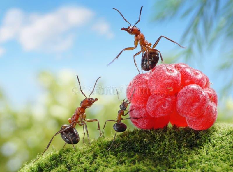 De snoepjes zijn ongezond voor kinderen!  mierenverhalen stock foto