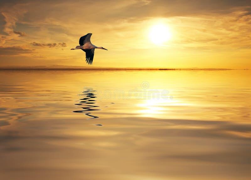 De solitaire vogel royalty-vrije stock foto's