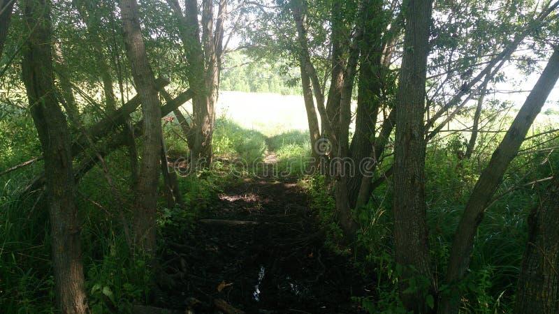 De sommarvägen och träden i Tambov royaltyfri bild