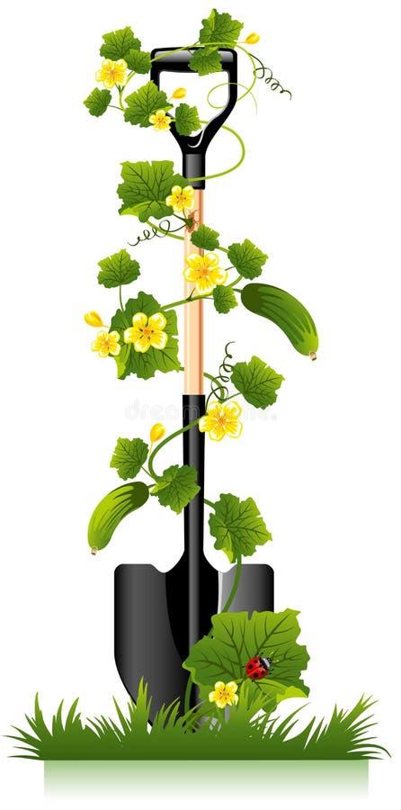 De spade en de komkommer van de tuin stock illustratie