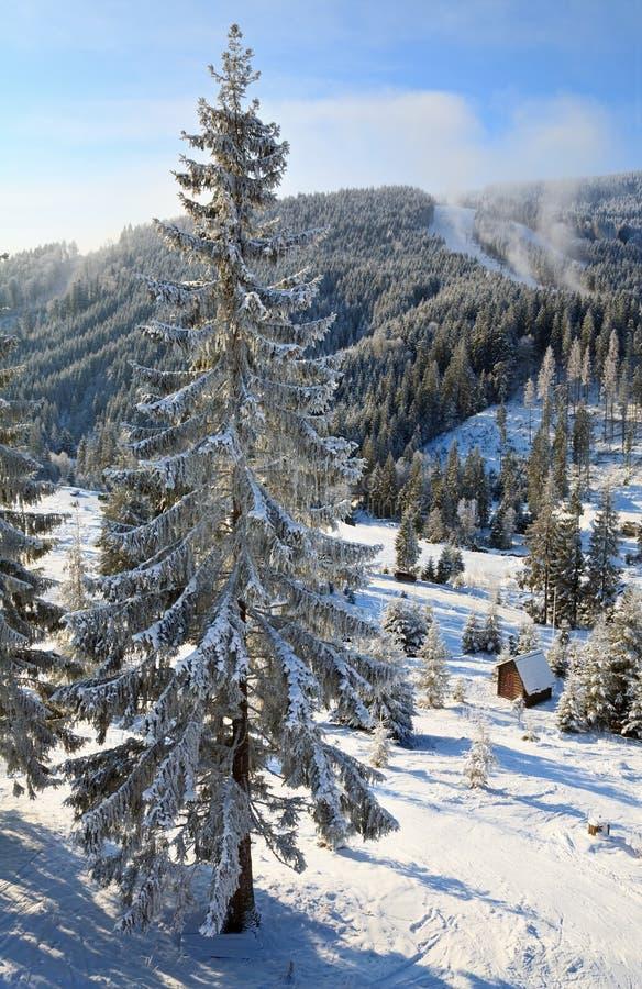 De sparren van de winter in berg stock afbeelding