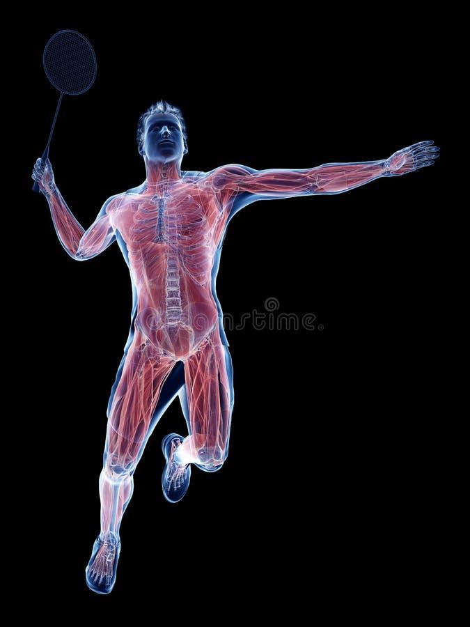 De spieren van een badmintonspeler vector illustratie