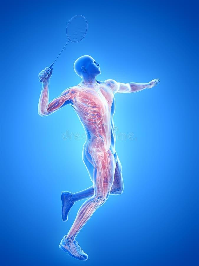 De spieren van een badmintonspeler stock illustratie