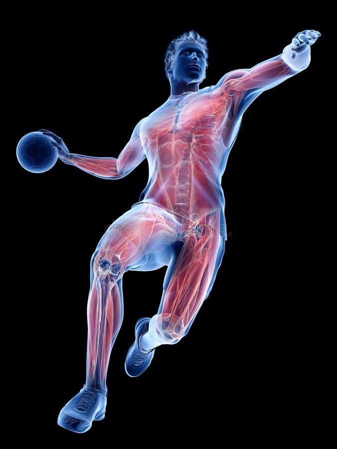 De spieren van een handbalspeler royalty-vrije illustratie