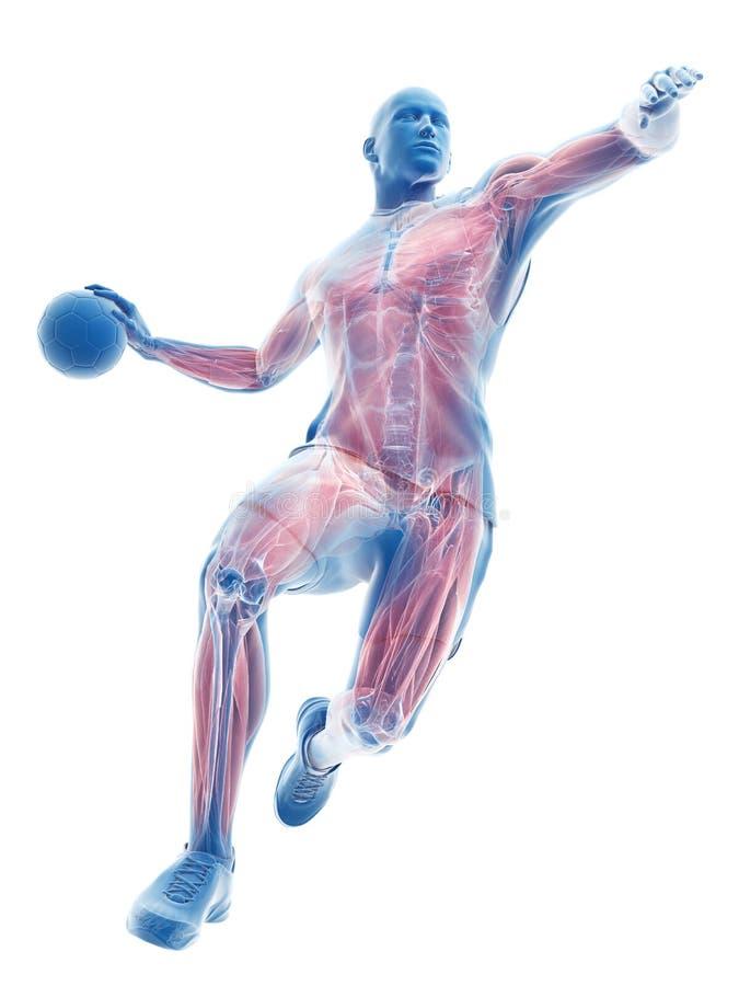 De spieren van een handbalspeler vector illustratie