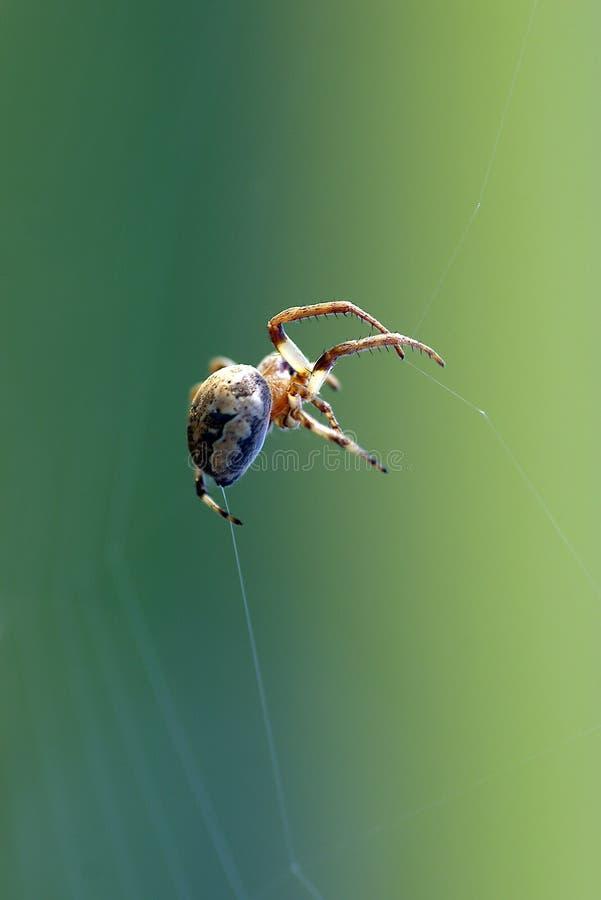 De spin hangt in lucht stock foto