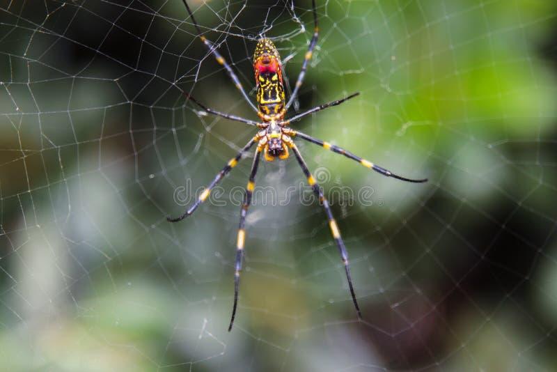 De spin kijkt als een Koreaans demon stock foto's
