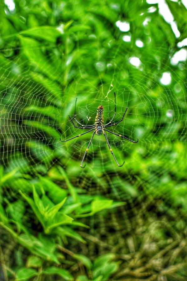 De spin slaapt op spinneweb stock afbeeldingen