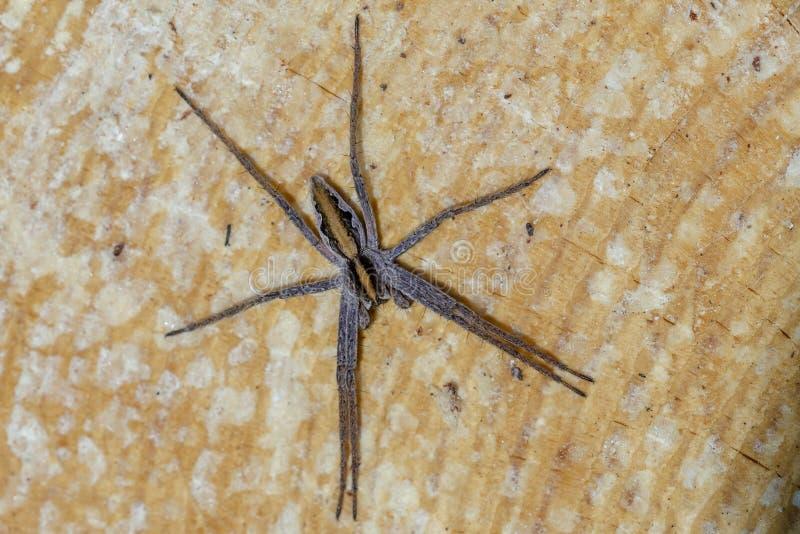 De spin van het kinderdagverblijfweb op hout royalty-vrije stock afbeelding