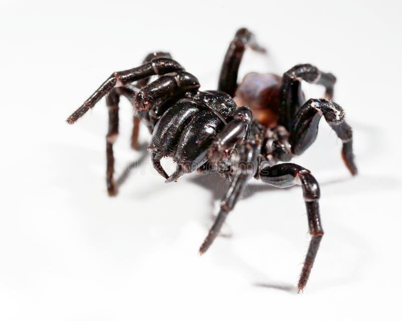 De spin van het trechterweb royalty-vrije stock foto's