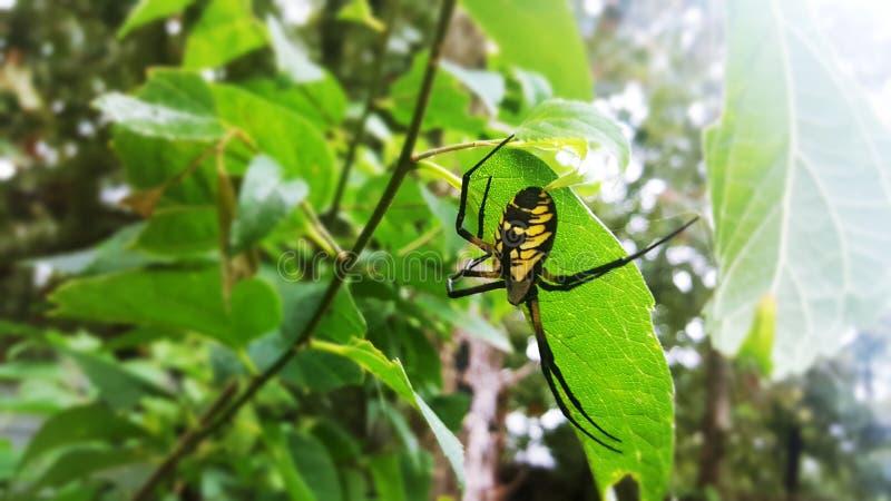 De spin van de Orkwever stock afbeeldingen