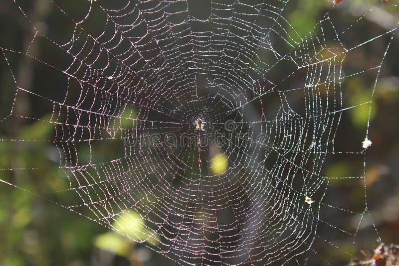 De spin verpakte het Web in het hout in de herfst royalty-vrije stock foto's