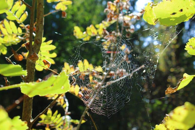 De spin verpakte het Web in het hout in de herfst royalty-vrije stock foto