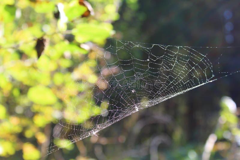 De spin verpakte het Web in het hout in de herfst royalty-vrije stock afbeeldingen