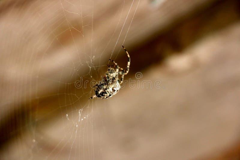 De spin weeft een Web stock fotografie