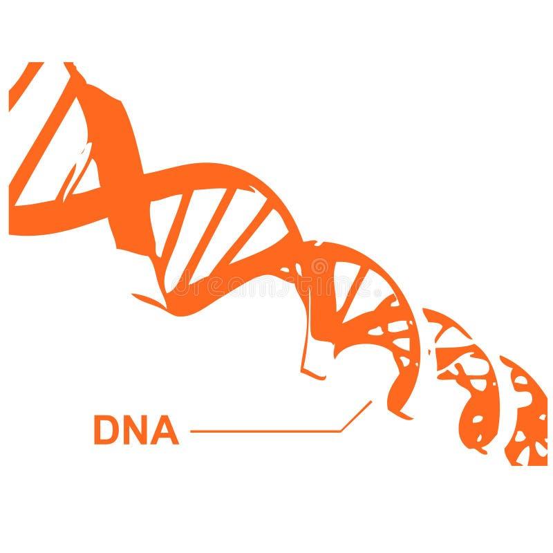 De Spiraal van DNA in vectoren stock illustratie