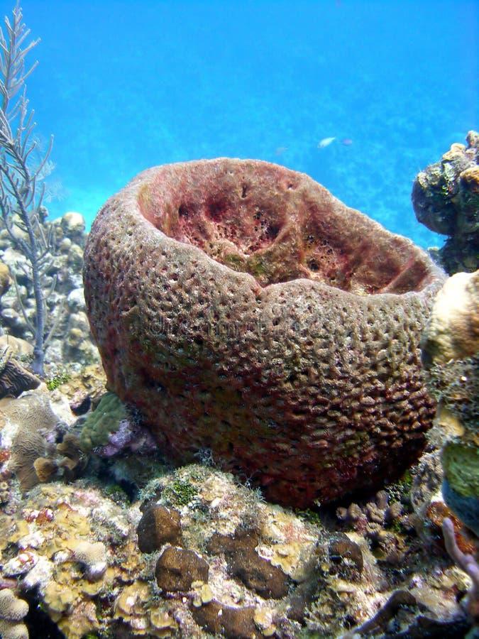 De spons van het vat stock afbeeldingen