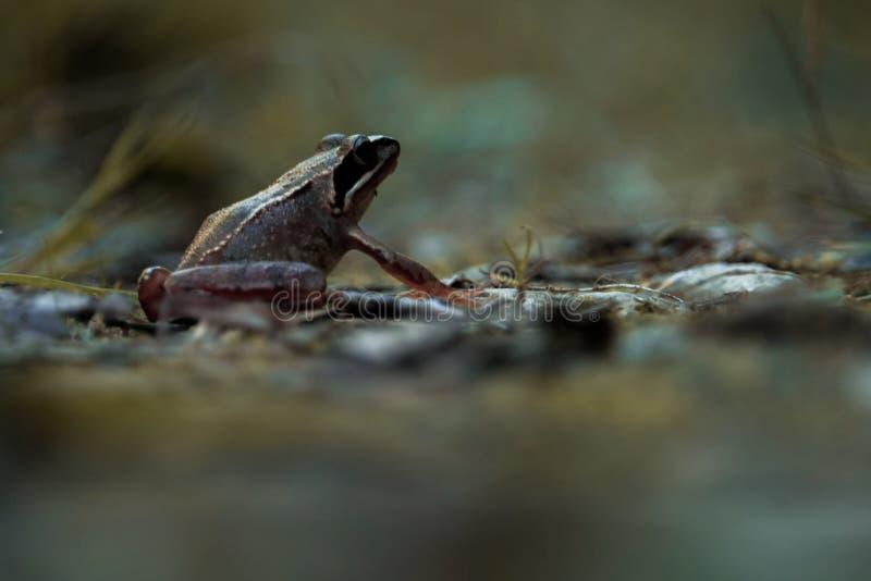 De spontane kikker in de berg royalty-vrije stock fotografie