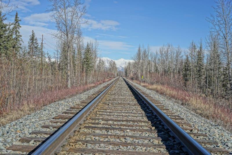 De sporen die van de spoorweg door het hout snijden royalty-vrije stock afbeelding