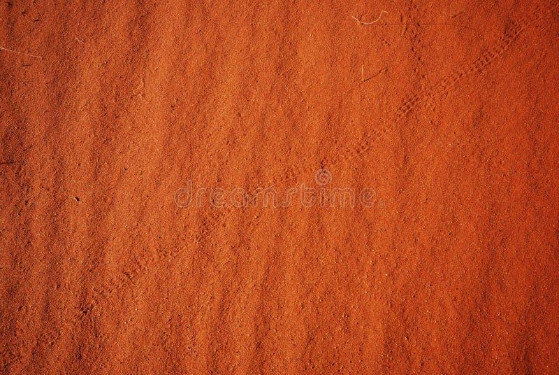 De sporen van de hagedis en van de slang op zandduin stock foto