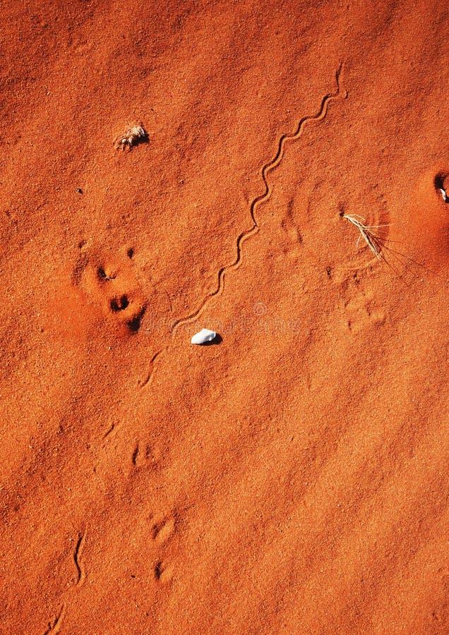 De sporen van de slang op zandduin stock afbeelding