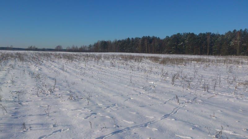De sporen van hazen in de sneeuw royalty-vrije stock foto