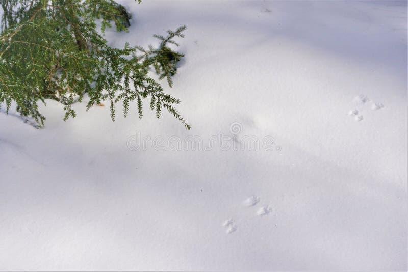 De sporen van het de wintergebied in knapperige sneeuw worden bewaard die royalty-vrije stock afbeelding