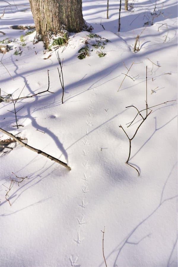 De sporen van het de wintergebied in knapperige sneeuw worden bewaard die royalty-vrije stock afbeeldingen