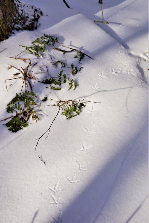De sporen van het de wintergebied in knapperige sneeuw worden bewaard die stock foto's