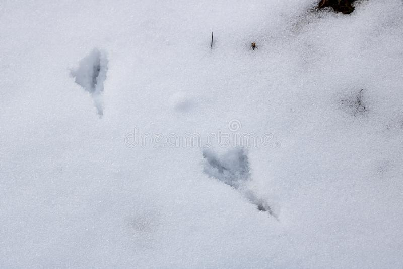 De sporen van vogels in de sneeuw sluiten omhoog stock fotografie