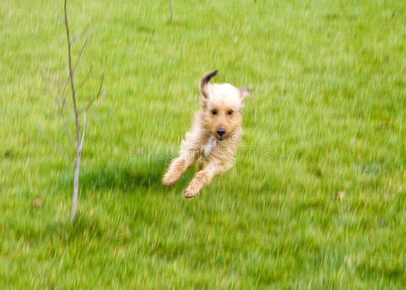 De sport van de hond royalty-vrije stock foto